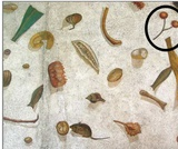 Ancient Greece Inspired Art: Trompe L'Oeil