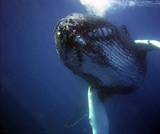 The Wonderful World of Whales: An Interactive Story Map